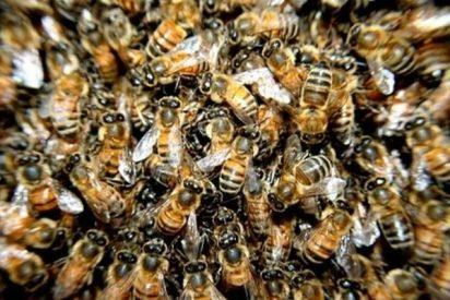 ¿Sabías que las abejas relacionan cantidades con símbolos como hacemos los humanos con los números?