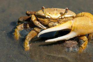 Descubren una nueva especie de crustáceo en el Cantábrico