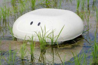 Japoneses emplean a este simpático robot 'campesino' para cuidar los arrozales