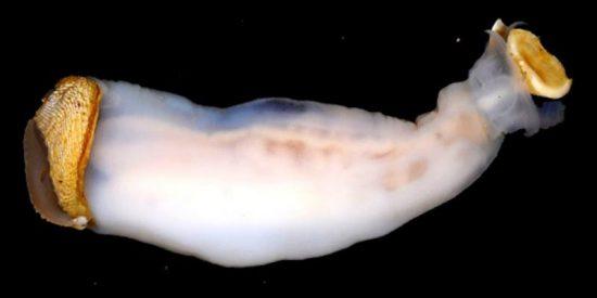 Este extraño gusano que come piedras es descubierto en Filipinas