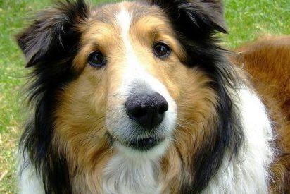 Demuestran que los perros pueden estresarse tanto como sus dueños