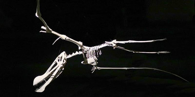 Brasil gana el juicio a Francia y repatriará fósiles de más de 100 millones de años