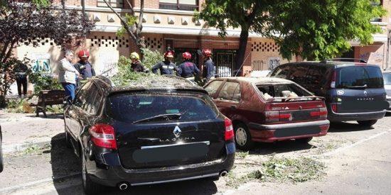 Un árbol enorme cae en la calle Vía de Valladolid y destroza varios coches