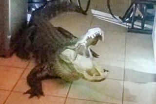 Patos, gansos y caimanes yonkis en EEUU por culpa de las drogas que tiran por el retrete