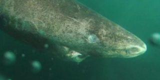 Le cortan la cola a este tiburón por diversión, lo dejan ir condenándolo a una muerte segura y causan indignación