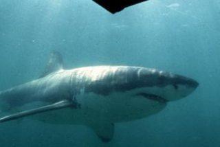 Este fotógrafo se salva por los pelos de que un enorme tiburón blanco lo ataque en la cara