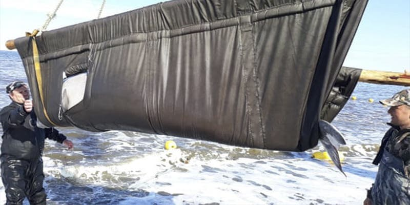 Rusia criticada por lo chapuceramente que ha 'liberado' la primera manada de ballenas cautivas