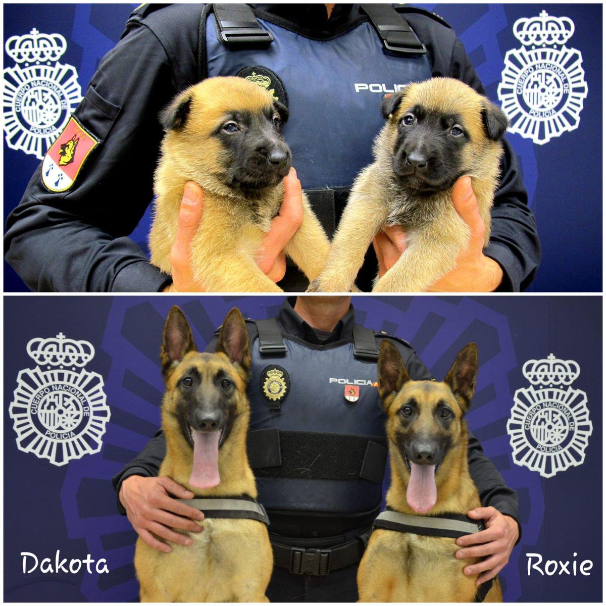 La foto de la Policía con la historia vital de dos agentes caninos conmueve Twitter