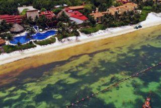 Desastre en el Caribe por la marea de algas que invade sus paradisíacas playas