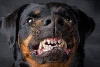 Los 10 perros más fuertes, feroces y peligrosos del mundo