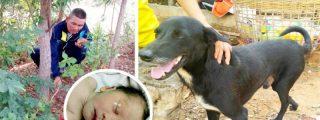 Los 10 animales que salvaron la vida a sus dueños