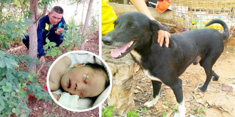 Tailandia: Un perro rescata a un bebé que había sido enterrado vivo por su madre