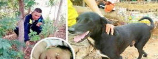 Mascotas: 10 animales que salvaron la vida a sus dueños