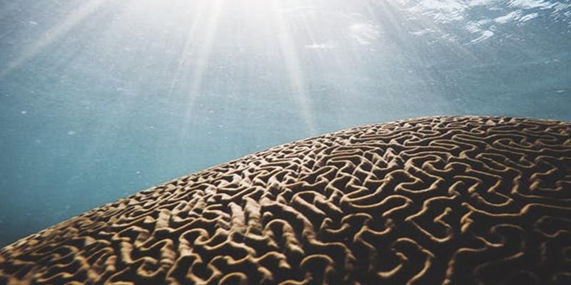 Esclerosis múltiple: cómo luchar contra una enfermedad con mil caras