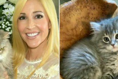 Pareja paga 25.000 dólares para clonar a este gato