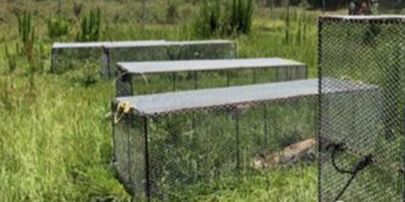 Resultado de imagen para la granja de cadaveres