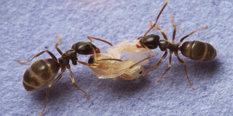 ¡Horror! Estas hormigas invaden un vuelo de Italia a Estados Unidos