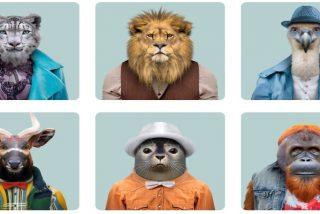 Pulpo, delfín, chimpance, perro, hormiga... estos son los 10 animales más inteligentes