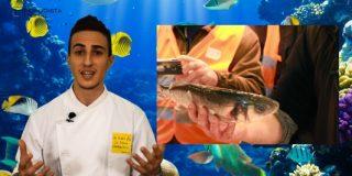 Listas PD / Los 5 mejores consejos para reconocer si un pescado es fresco