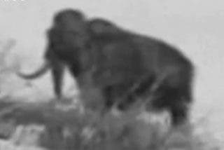 ¿Un mamut vivo en Siberia?