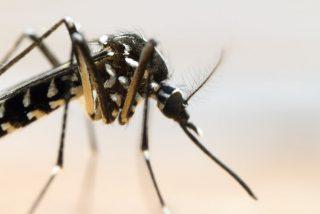 Chikunguña: Cómo la globalización extiende nuevas enfermedades por el mundo
