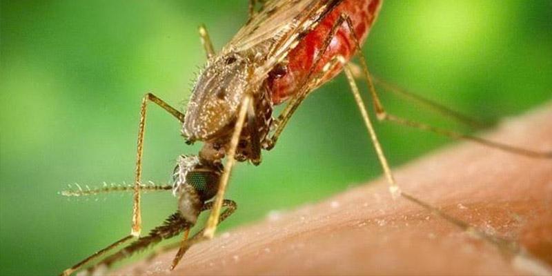 Ya hay una vacuna contra la malaria lista para ser utilizada