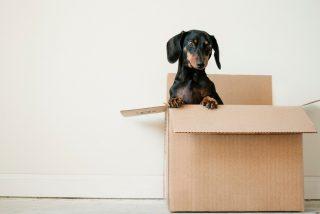 Las tres pesadillas habituales a la hora de mudarse