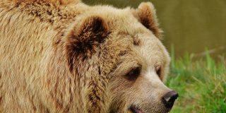 Chiste: el del rabino, el cura, el pastor y el oso cariñoso