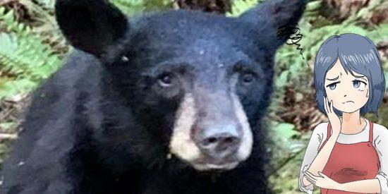Sacrifican a este oso negro por familiarizarse con las personas que le daban comida y se hacían 'selfies' con él