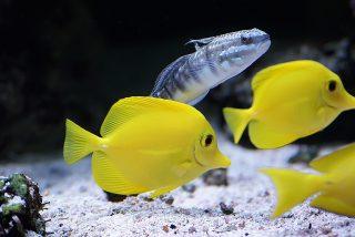 Mascotas: Cámaras de seguridad pillan a este hombre envenenando a decenas de peces tropicales en una tienda