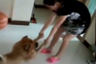 Este perro guarrillo finge estar muerto para que no lo bañen