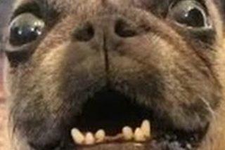 Denuncian a un hombre por abusar sexualmente de la perra de su vecino y provocarle infecciones vaginales