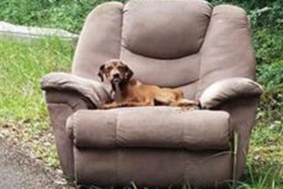 Unos desalmados abandonan a este perro en un sillón y el can no se mueve esperando a sus dueños