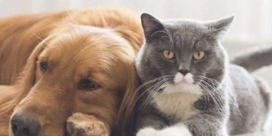 En España hay el doble de mascotas que de niños