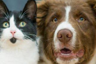 Los perros y gatos más graciosos del mundo