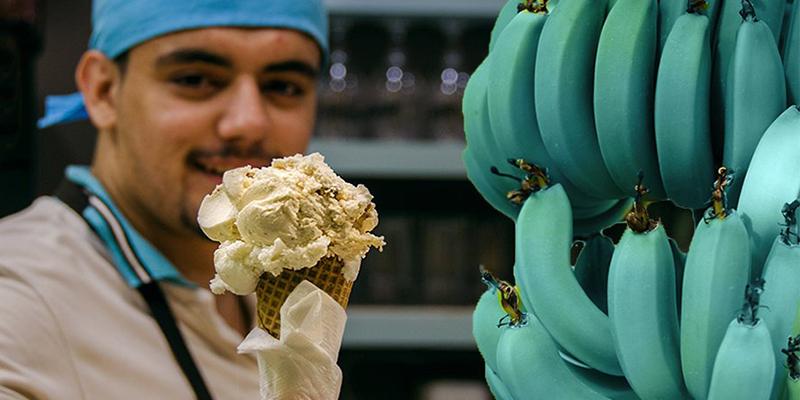 Así son los plátanos que pronto podrás comprar: azules y saben a helado de vainilla