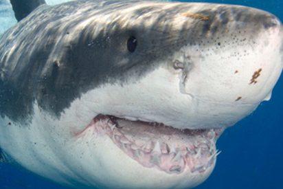 Este enorme tiburón blanco aterroriza a unos pescadores al robarles el cebo que tenían en el barco