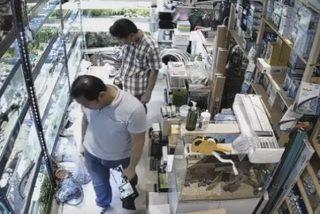 Cámaras des seguridad pillan a este hombre envenenando a decenas de peces tropicales en una tienda de mascotas