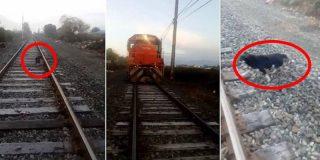 Maquinista de un tren salva a un perro que unos desalmados habían encadenado a la vía