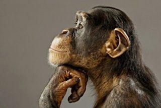 Los 10 animales más inteligentes