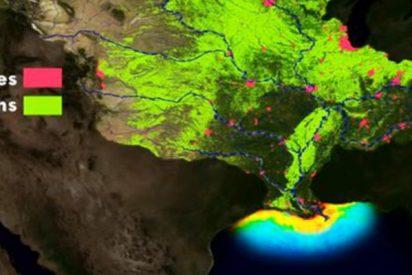 Así es la descomunal zona muerta que resurgió en el golfo de México y puede convertirse en la más letal de la historia