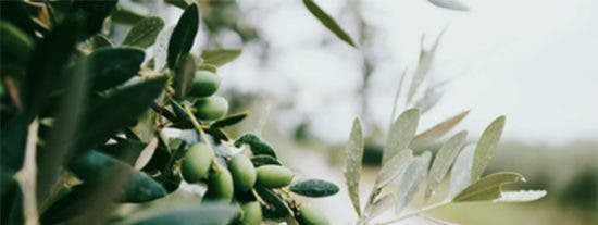 El aceite de oliva, el aliño por excelencia