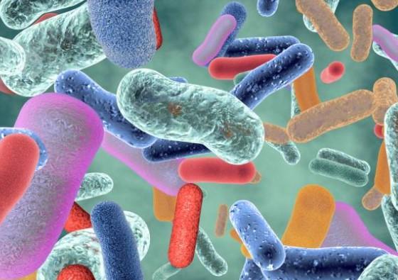 sándalo antibacteriano