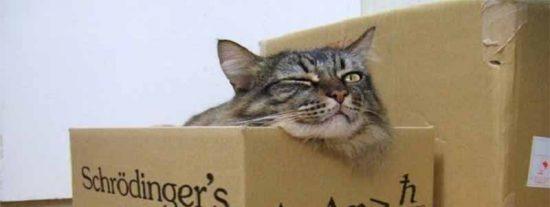 Superposición cuántica: Físicos logran predecir los saltos del 'gato de Schrödinger' y salvarlo