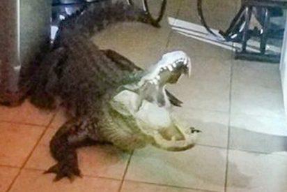 """""""Mamá hay un lagarto muy grande en la cocina"""": Enorme caimán irrumpe en la casa"""