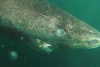 Le cortan la cola a este tiburón por diversión, lo dejan ir condenándolo a una muerte segura y causan indignac