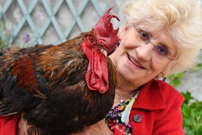 Llevan a este gallo a juicio en Francia por cantar demasiado temprano