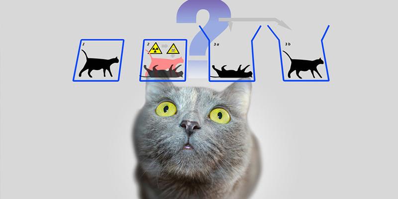 Logran predecir el salto cuántico y 'salvar' al gato de Schrödinger