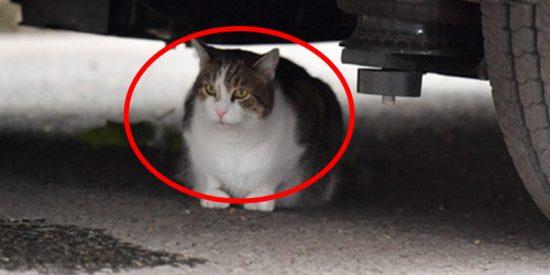 """El gato Larry de Downing Street provoca un """"problema de seguridad nacional"""" al refugiarse debajo de la limusina de Trump"""
