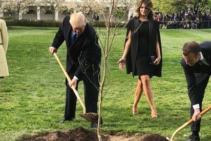 Muere el roble plantado por Macron y Trump en el jardín de la Casa Blanca